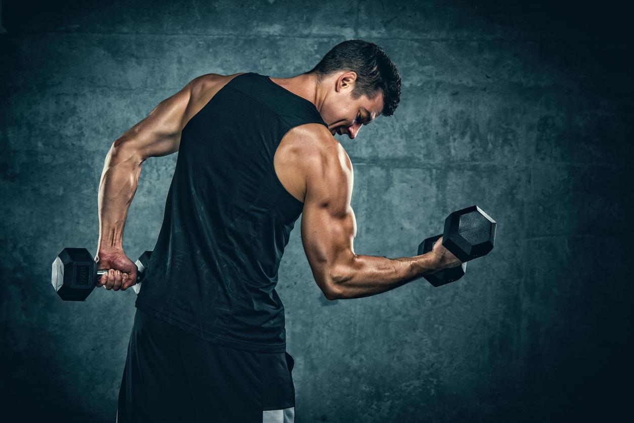 筋肉 コルチゾール
