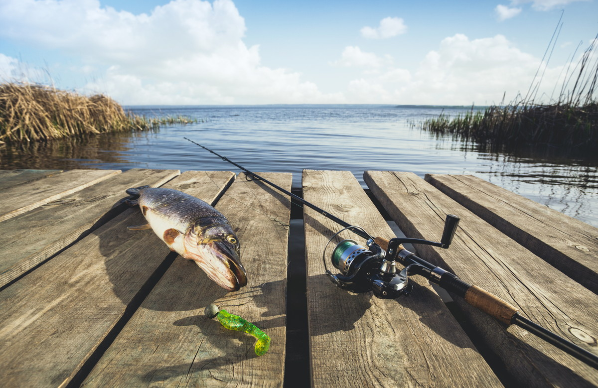 山形の釣り情報 入手の仕方と釣りの楽しみ方、毒魚の紹介